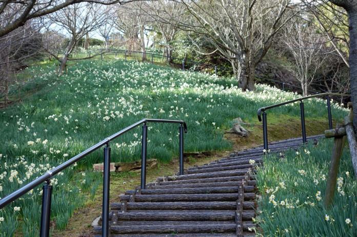 白野江植物公園-山頂付近